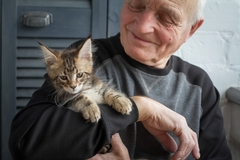 Deciding The Best Pet Option For Seniors