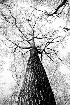 Winter: A Tree's Perspective