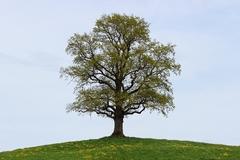 Tree Fertilization Part One