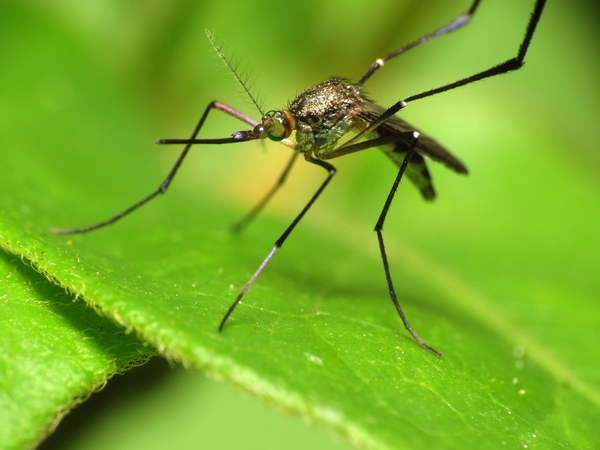 Are Mosquitoes Bugging You?