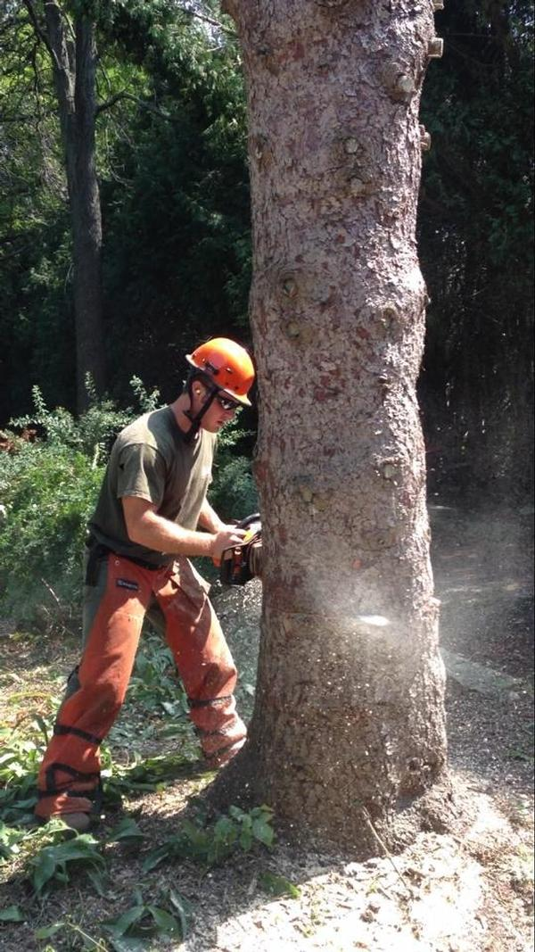 Experienced Arborists Needed in Southeastern Wisconsin