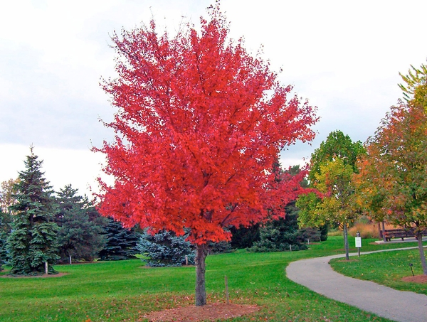 Top 5 Trees to Enjoy this Fall