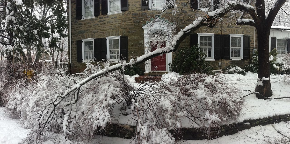 Winter Inspection of your Trees for Problems