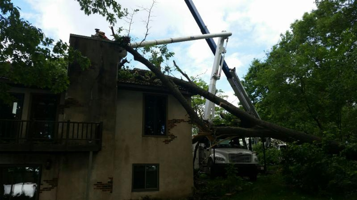 Summer Storms Take Their Toll on Wisconsin Trees