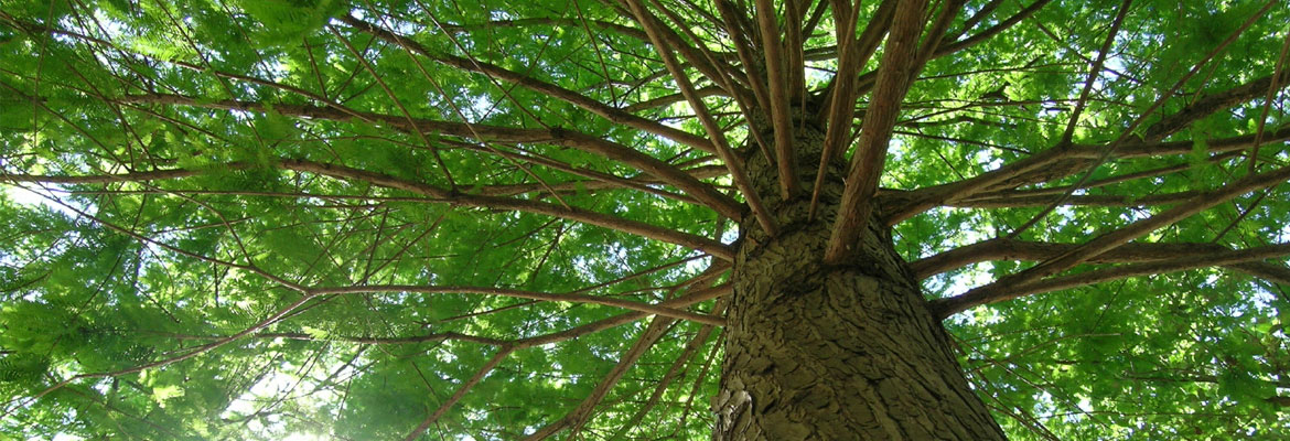 First Choice Tree Care in Junction City, WI