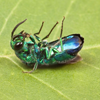 EAB services in Junction City, WI