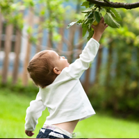 First Choice Tree Care Consultation Services in Junction City, WI